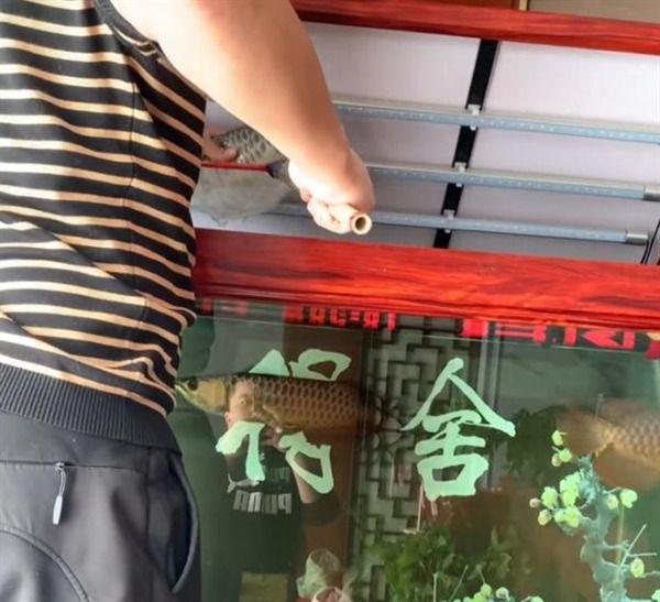 小区封闭男子杀自养金龙鱼做菜惹争议 网友:有钱就是任性